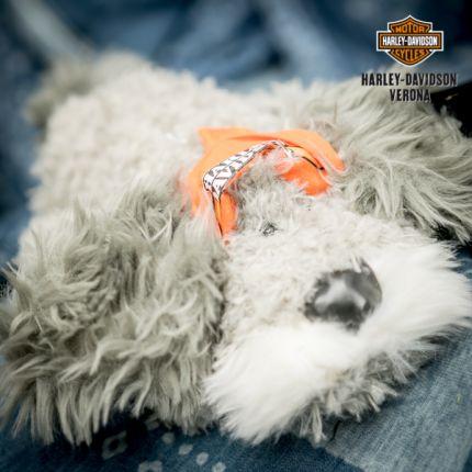 Peluches Harley-Davidson® grey